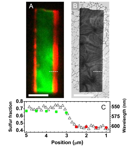 Real-color PL image of a CdSSe lateral heterostructure nanosheet excited by 405 continuous-wave laser