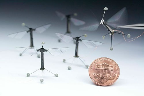 Harvard Robotic Insects 3