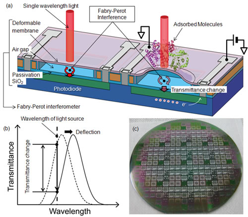 Schematic image of the label-free biosensor based on a MEMS Fabry–Perot interferometer