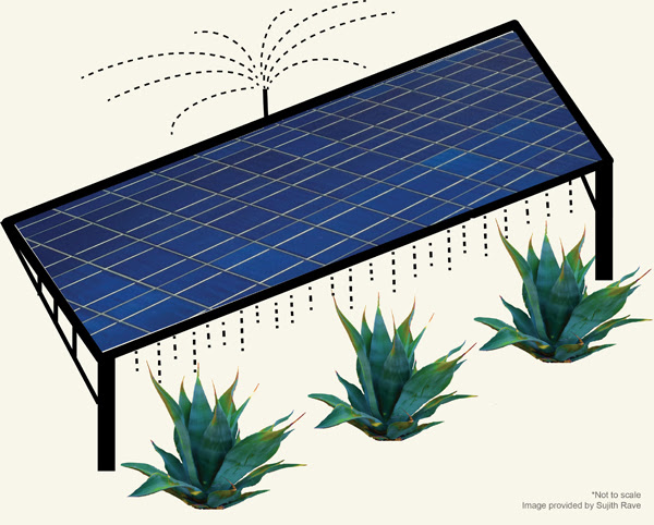 On a co-located solar farm, runoff from water used to clean photovoltaic panels would nourish agave or other biofuel crops