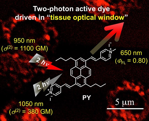 New functional dye for realizing a versatile two-photon excitation microscope