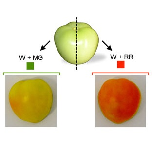 Photonics and Tomatoes