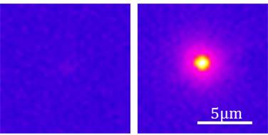 An infrared camera captures the luminescence (emission of light) after optical excitation of both nanostructures