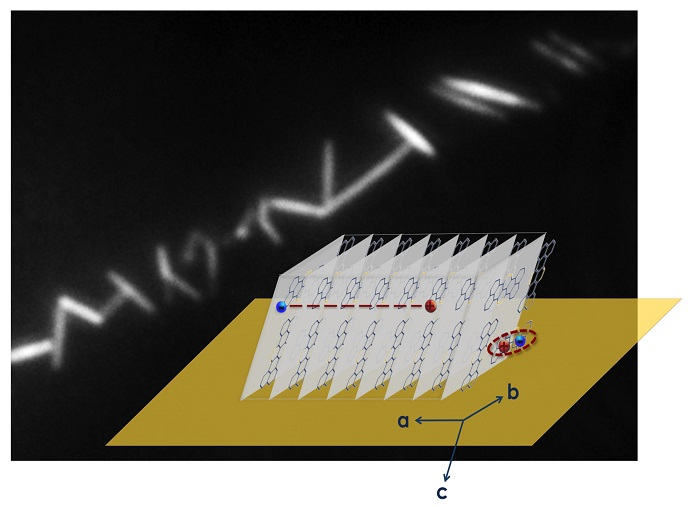 Fluorescence image of self-assembled TAT crystalline nanowires