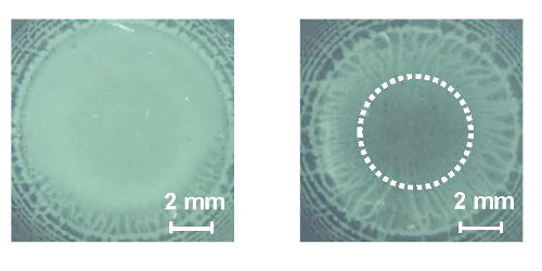 Low-magnification reflection images obtained by polarized microscope with cross-Nicol setup