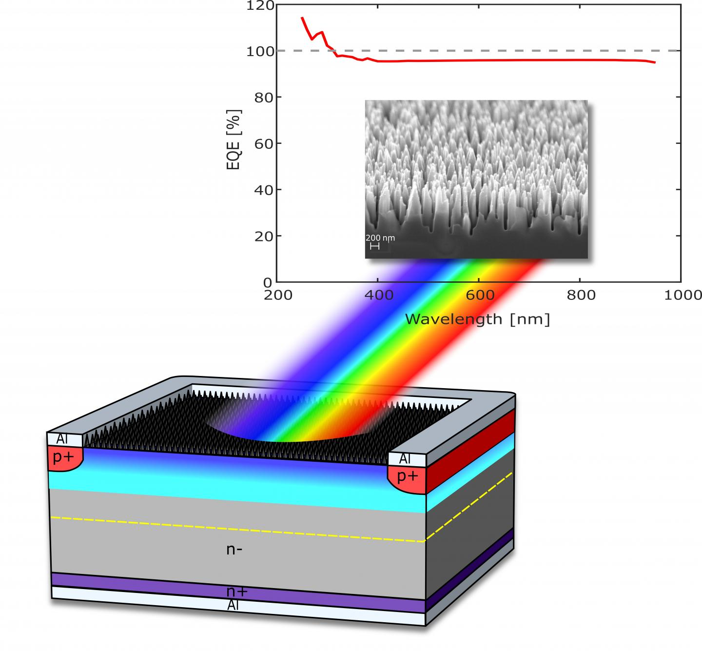Structure and performance of the novel photodetector