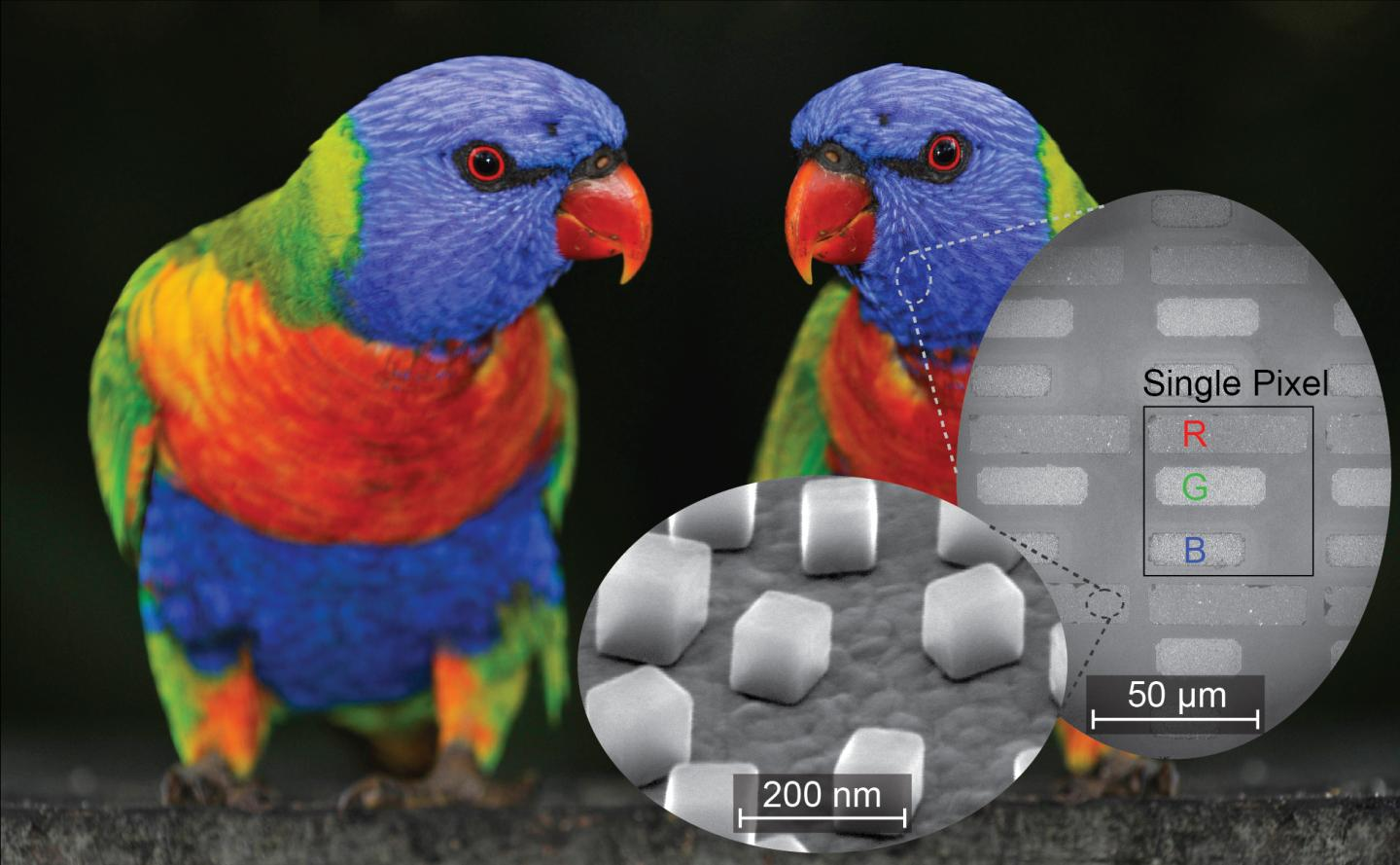 Researchers tested a new technique for printing and imaging in both color and infrared with this image of a parrot