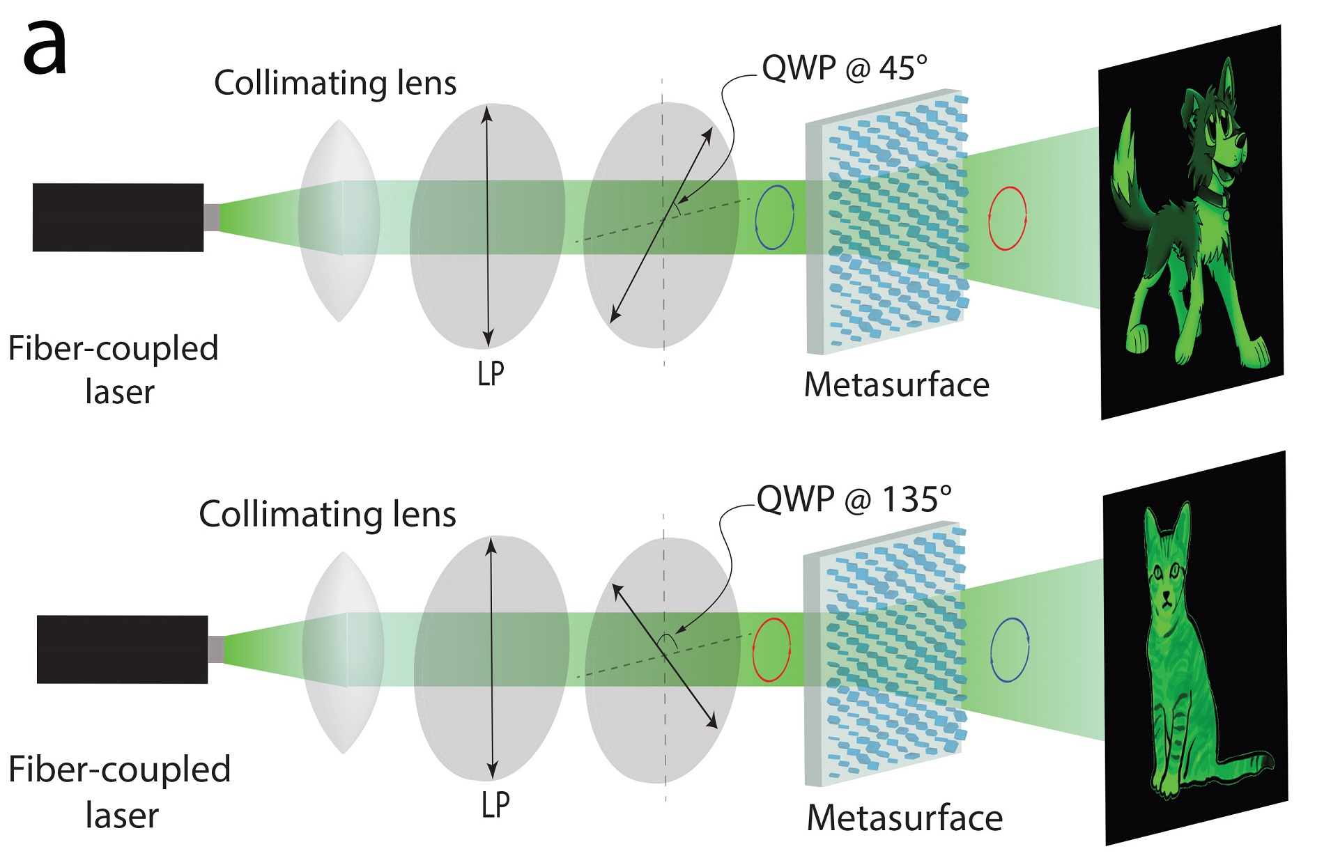 A single metasurface encodes two separate holograms