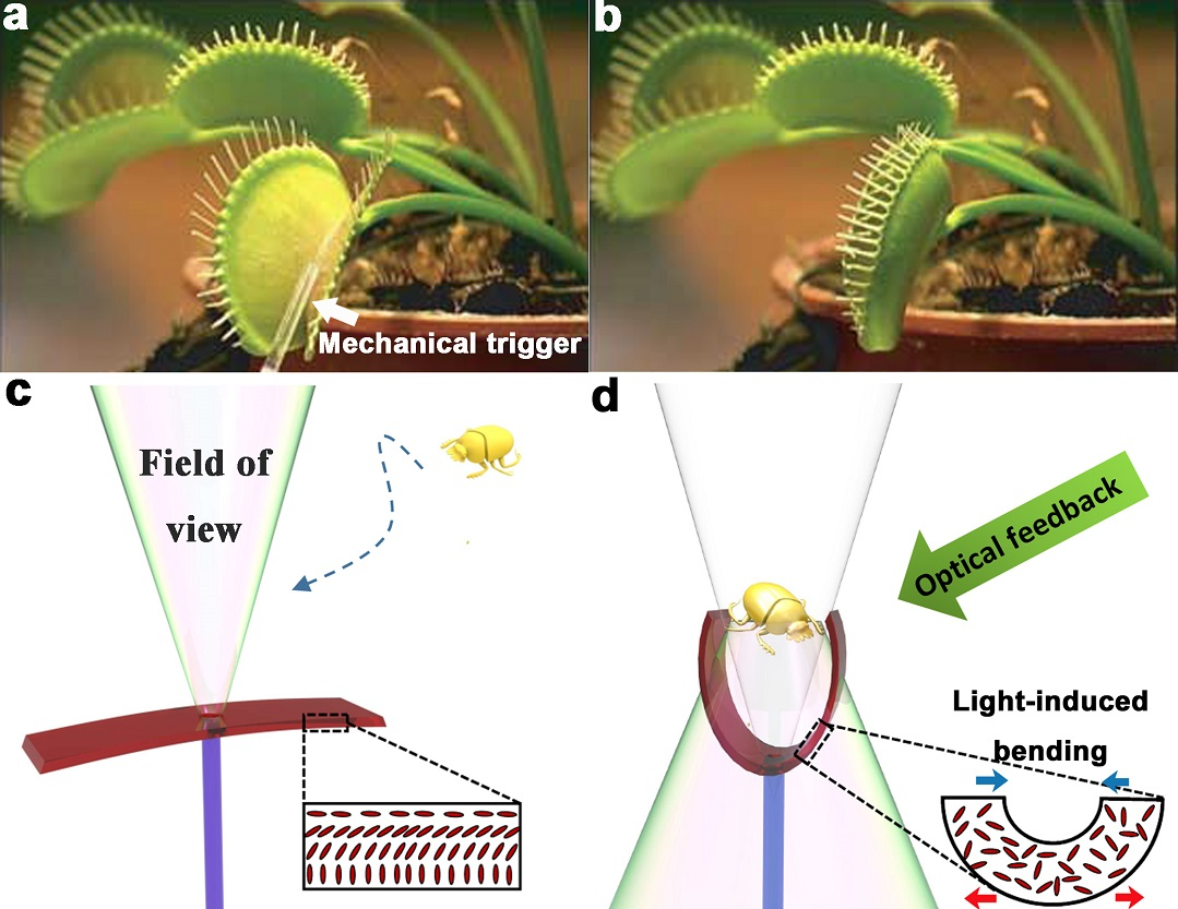 Schematic drawing of the light-triggered artificial flytrap at its open stage, when no object has entered its field of view.