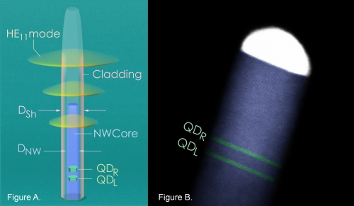 The schematic of a quantum dot molecule embedded inside a clad nanowire